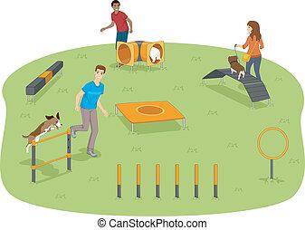 agilitás, kutya, teszt
