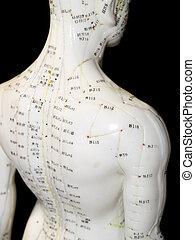 akupunktúra, fogalom