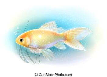 akvárium, aranyhal, fish., sea., gyakorlatias, ábra
