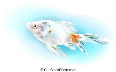 akvárium, aranyhal, fish., sea., gyakorlatias, illustration.