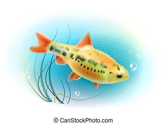 akvárium, world., fish., gyönyörű, víz alatti, sea., fish, gyakorlatias, illustration.