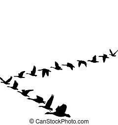 alakít, repülés, libák, egység
