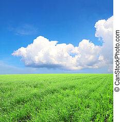 alatt, zöld fű, kék, friss, ég, nyár, mező, táj