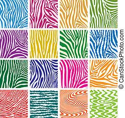 alkat, állhatatos, színes, vektor, zebra bőr