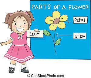 alkatrészek, virág