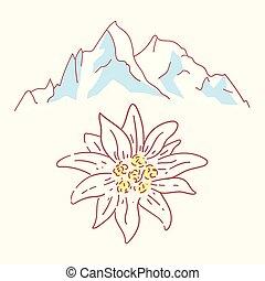 alpok, alpinism, edelweiss, virág, hegyek, jelkép, hegymászás, németország, jel