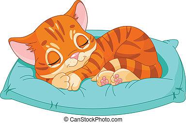 alvás, cica