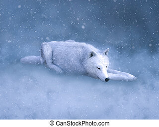 alvás, snow., vakolás, farkas, méltóságteljes, fehér, 3