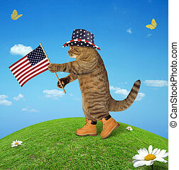 amerikai, 2, lobogó, macska