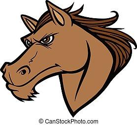 amerikai félvad ló, fej