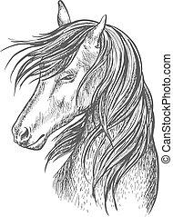 amerikai félvad ló, portré, black ló, skicc