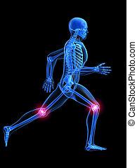 anatómia, futás, ember