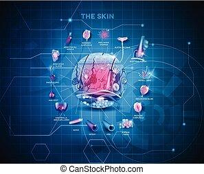 anatómia, háttér, bőr