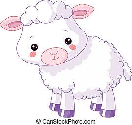 animals., tanya, bárány