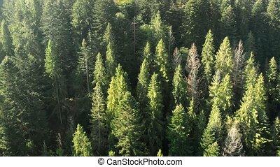 antenna, hegyek, magas, erdő, csinos, bitófák, ukrán, kilátás