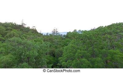 antenna vadászterület, erdő, bitófák
