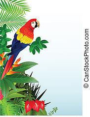 ara papagáj, madár, erdő, tropikus