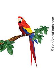 ara papagáj, madár