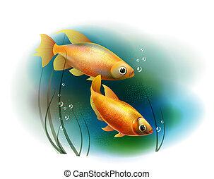 aranyhal, párosít, tenger