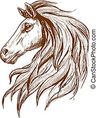 arcél, arabian ló, skicc, fej