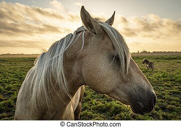 arcél, ló, napnyugta