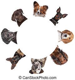 arcképek, karika, csoport, mindenfelé, kutya