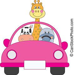 autó, állatok, vezetés