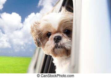 autó, lovagol, élvez, kutya