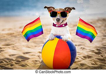 bágyasztó, buzi, kutya, tengerpart