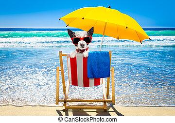 bágyasztó, szék, kutya, tengerpart
