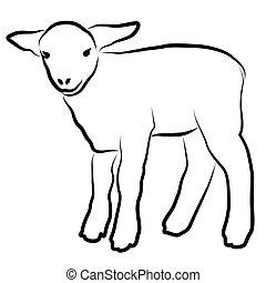bárány, fehér, árnykép, elszigetelt