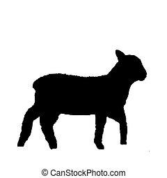 bárány, fekete, fehér, árnykép