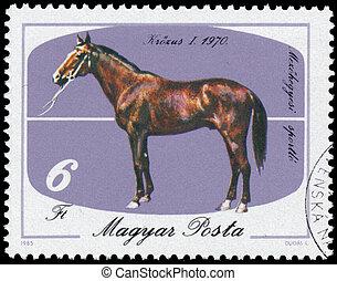 bélyeg, magyarország, ló, nyomtatott, látszik