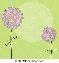 bíbor, elvont, virág, hortenzia, tavasz