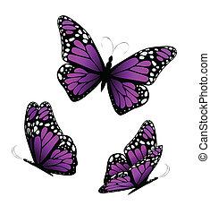 bíbor, tones., pillangók, vektor, három