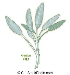bölcs, fűszernövény kert