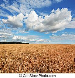 búza, cloudy ég, alatt, kék, mező, gyönyörű