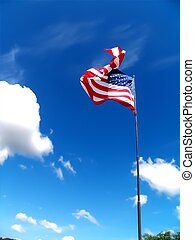 büszkeség, amerikai, 2