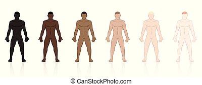 bőr, befest, írógépen ír, etnikai, hím, hulla