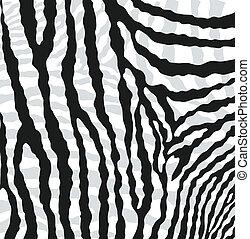 bőr, struktúra, elvont, zebra, vektor