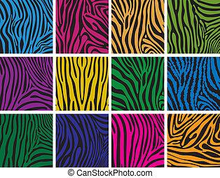 bőr, színes, alkat, állhatatos, zebra, vektor