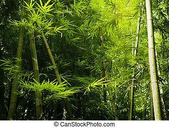 bambusz, ázsiai, erdő