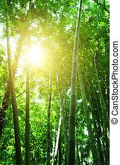 bambusz erdő, kilátás