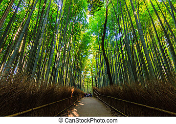 bambusz, groves.