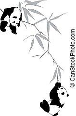 bambusz, pandas, elágazik