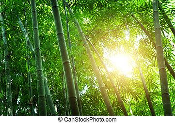 bambusz, zöld erdő
