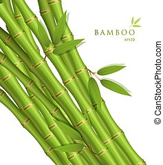 bambusz, zöld háttér