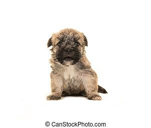 barna, öreg, ülés, kutya, négy, fényképezőgép, száj, nagy hím kenguru, fordulat, hét, kutyus, nyílik, -e