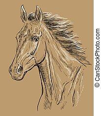 barna ló, 23, portré