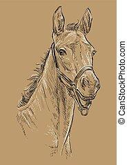barna ló, 24, portré